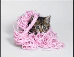 yarncat
